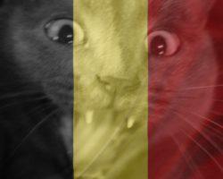 Les Rendez-Vous Musicaux de Francky la Night #35 – Spécial Belgique